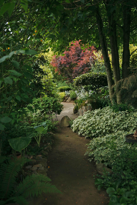 poszycie ogrodu